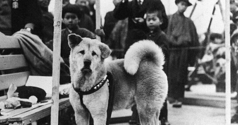 Rare Photos of Hachiko, the World's Most Loyal Dog