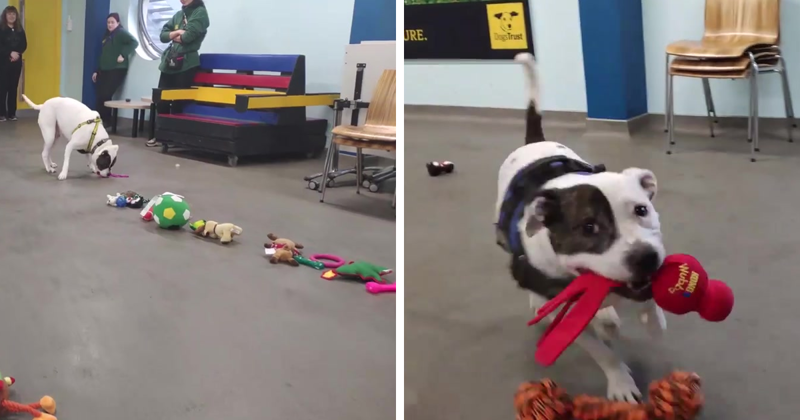 This Animal Shelter Lets Dogs Pick Their Own Christmas Presents, And They Are Excited