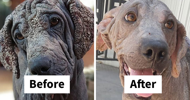 Guy Shares 28 Incredible Before & After Rescue Dog Transformations, Shows What Love Can Do