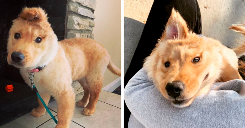 An Accidental Injury At Birth Left This Puppy With One Ear And She Rocks Her Unicorn Look