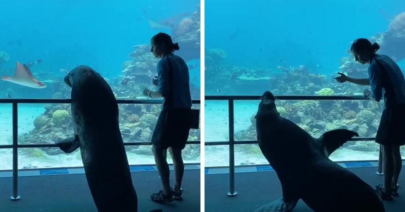 This Sea World Shares The Adventures Of A Sea Lion Who Gets To Visit Other Animals At The Oceanarium