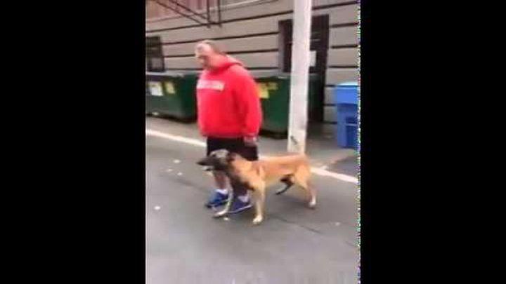 Хорошо обученная собака