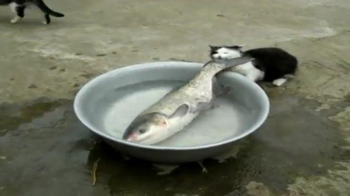 Рыбакотская Битва