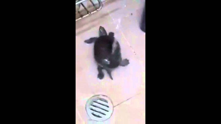 Черепаха купается
