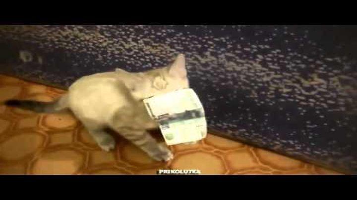 Очень жадный котёнок и деньги