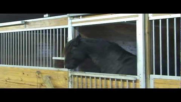 Хозяева никак не могли понять, как их лошадь постоянно исчезает