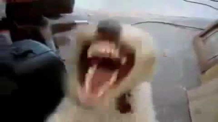 Если на собаку дунуть гелием