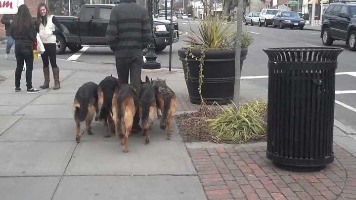 Собаки ни на шаг не отстают от своего хозяина