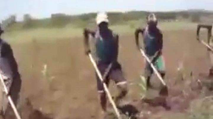 Задорные африканские работники