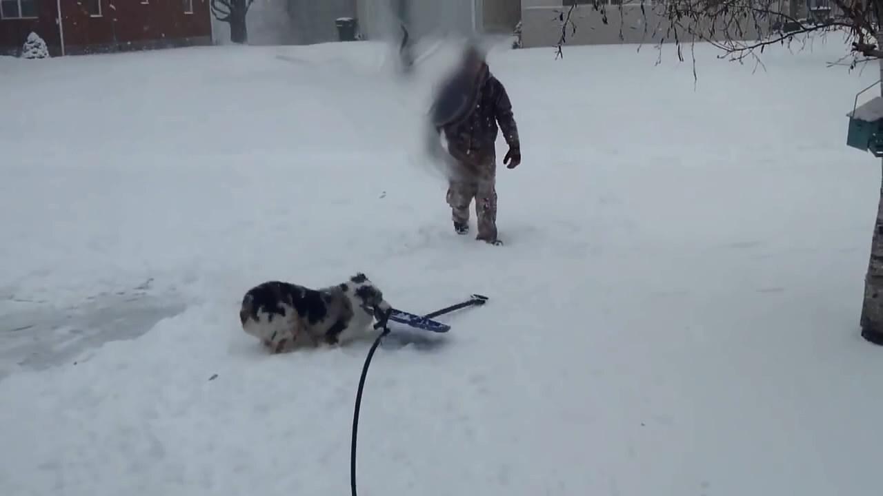 Собаки отрываются в снежное время