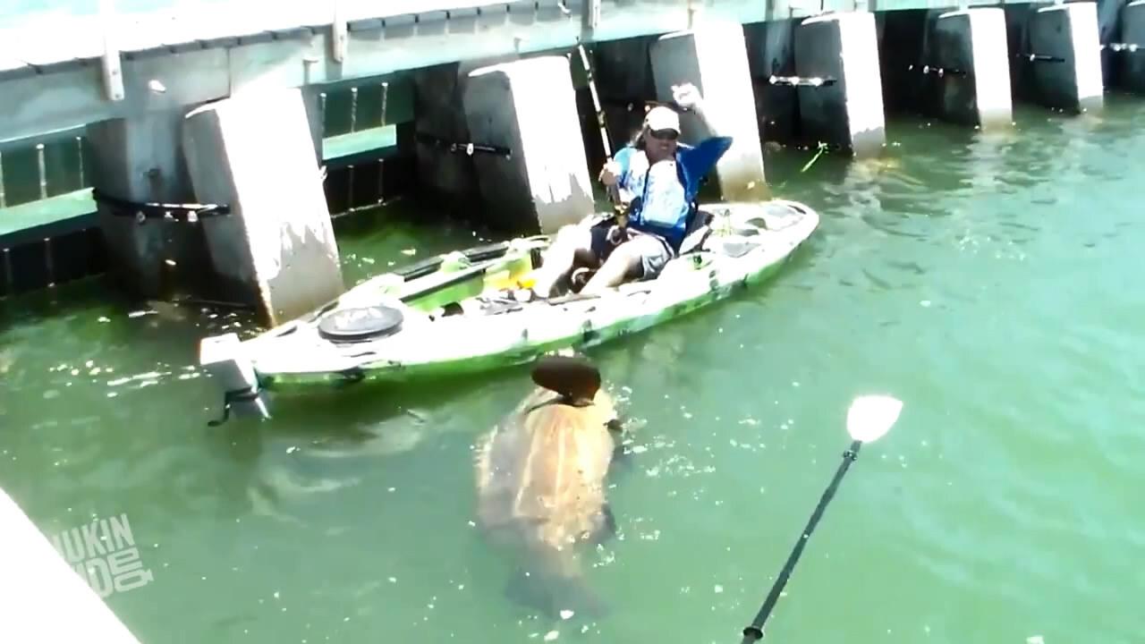 Удивительные случаи на рыбалке