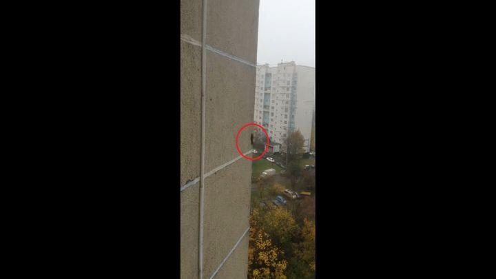 Пушистый экстремал бегает по стене многоэтажного дома