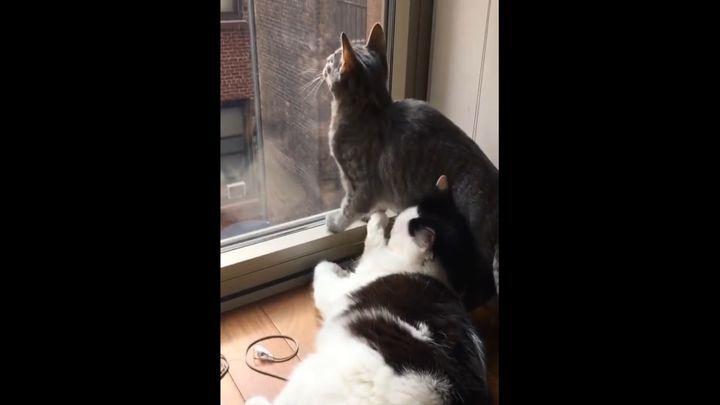 Как выглядит конфликт интересов в кошачьем мире