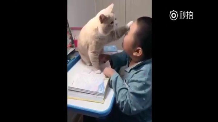 Очень ласковый кот мешает своему юному хозяину делать уроки