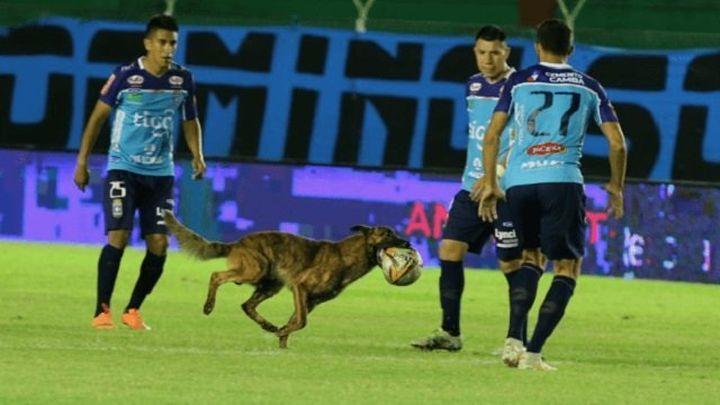 Полицейский пёс украл футбольный мяч и пробежался с ним по полю