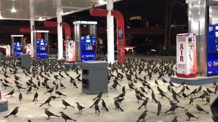 Сотни птиц прилетели ночью на автозаправочную станцию в Хьюстоне