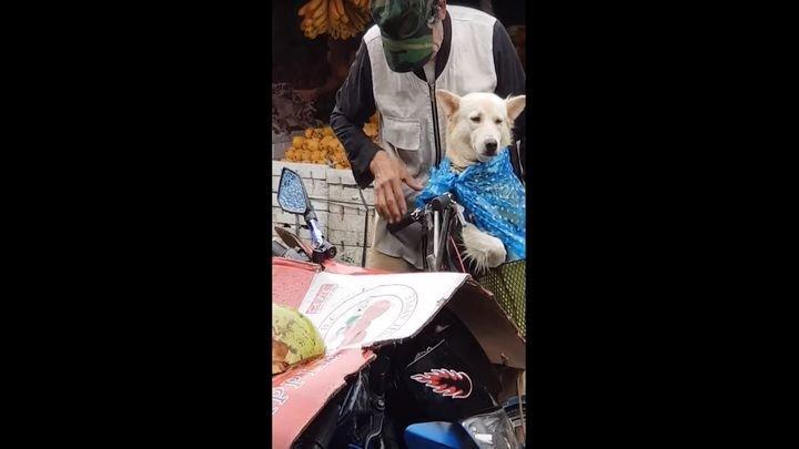 Мужчина защищает свою собаку от дождя