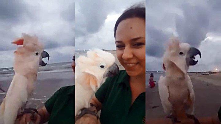 Попугай впервые увидел океан