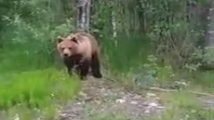 Ура, консервы! Встреча с медведем в Карелии чуть не обернулась трагедией