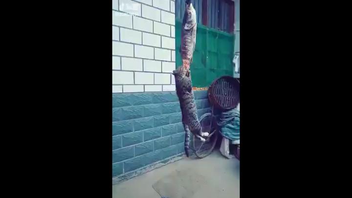 Кот устроил себе дозаправку в воздухе
