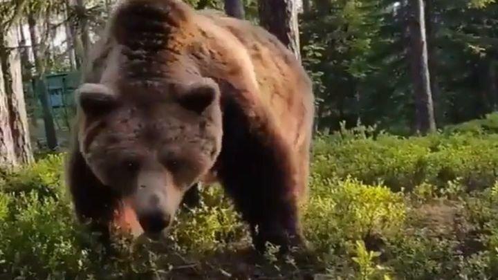 Неожиданная встреча с медведем после ночевки в лесу