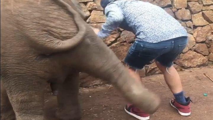 Слонёнок отвесил пинка назойливому любителю селфи