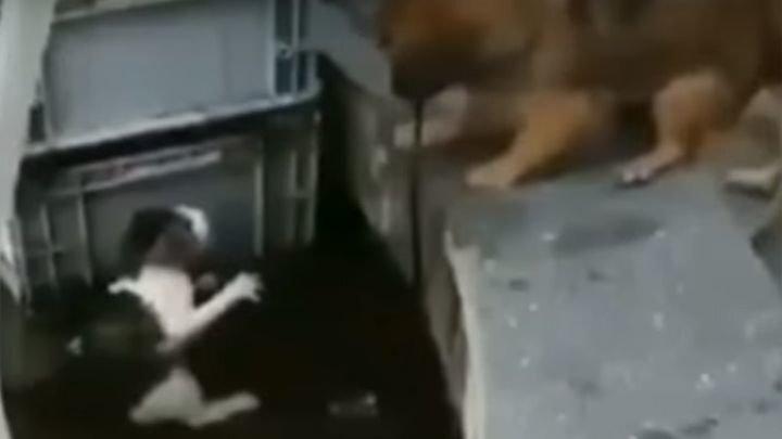 Пёс спас из воды тонущую кошку