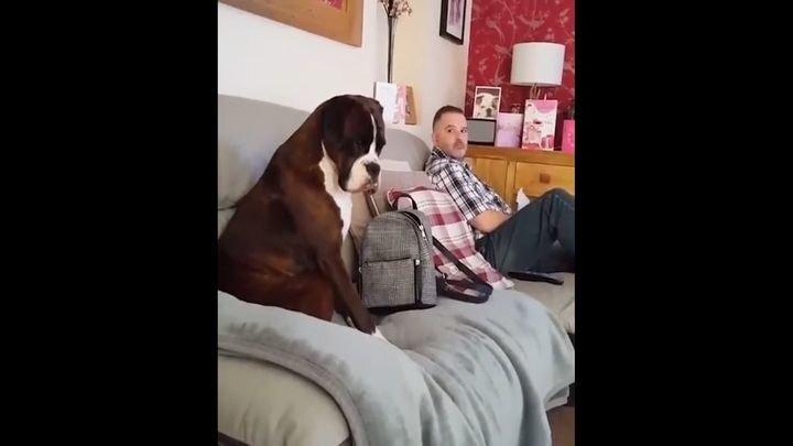 Пес обиделся на хозяина, который не хотел с ним делиться