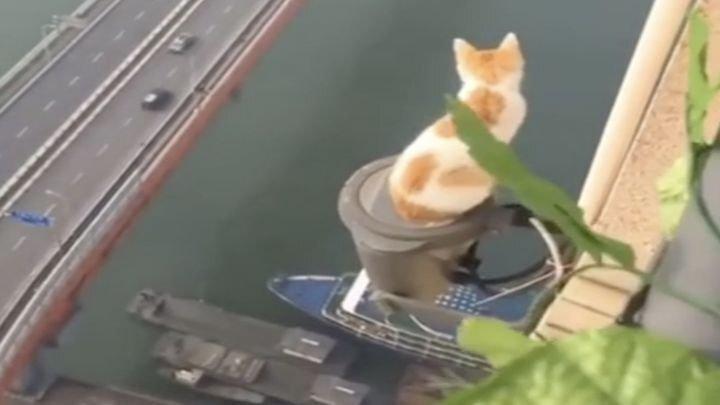 Бесстрашный кот осматривает пейзажи китайского мегаполиса