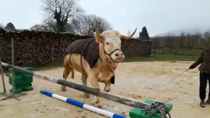 Когда конь родился в теле быка