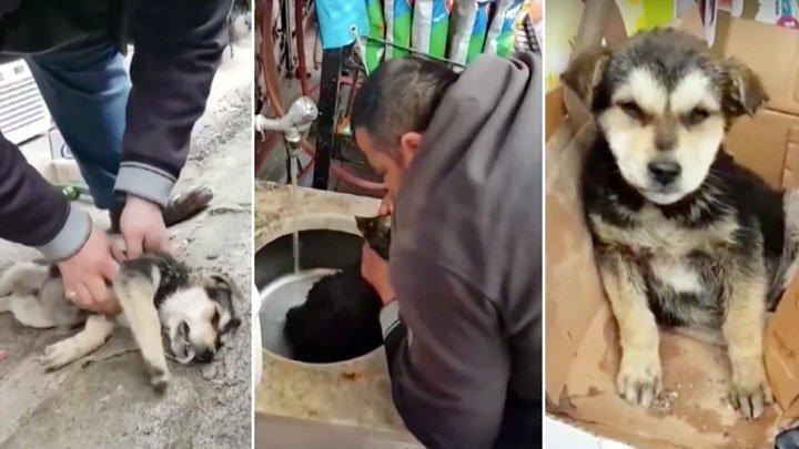 В Турции мужчина спас щенка, сделав ему искусственное дыхание