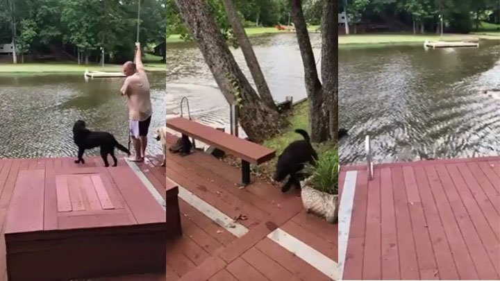 Собаки бросились спасать тонущего хозяина