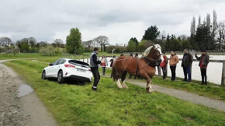 Лошадь-тяжеловоз вытягивает автомобиль из канавы