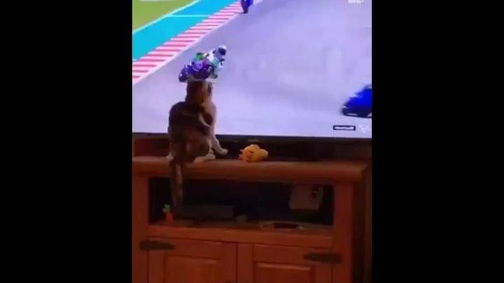 Пушистая пакостница помешала спортсмену завершить гонку
