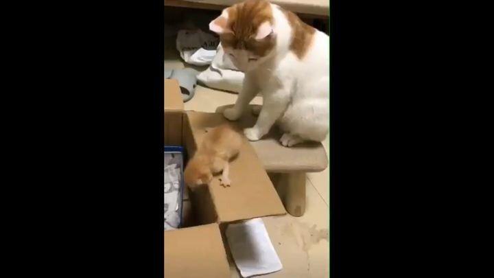 Мама-кошка, которая знает толк в воспитании