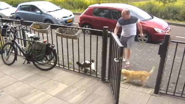 Кошка вступила в неравную схватку с собакой и её неадекватным хозяином