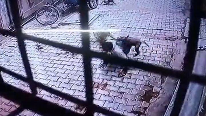 Момент нападения обезьян на мужчину попал на видео