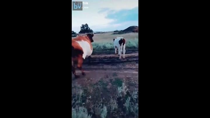Учимся быстро останавливать любую корову на ходу