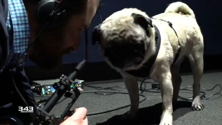 Игровые разработчики пригласили мопса для озвучивания пришельцев