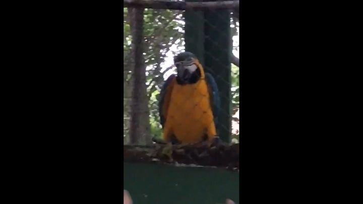 Прилетевший на вечеринку попугай отдался ритму и начал танцевать сам