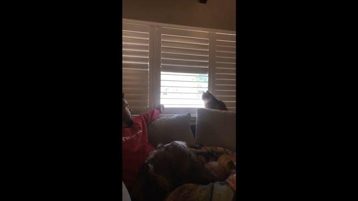 Кот, который привык доминировать над своими хозяевами