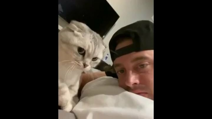 Хозяин кота запечатлел смешную реакцию питомца на попытку лизнуть его в ответ