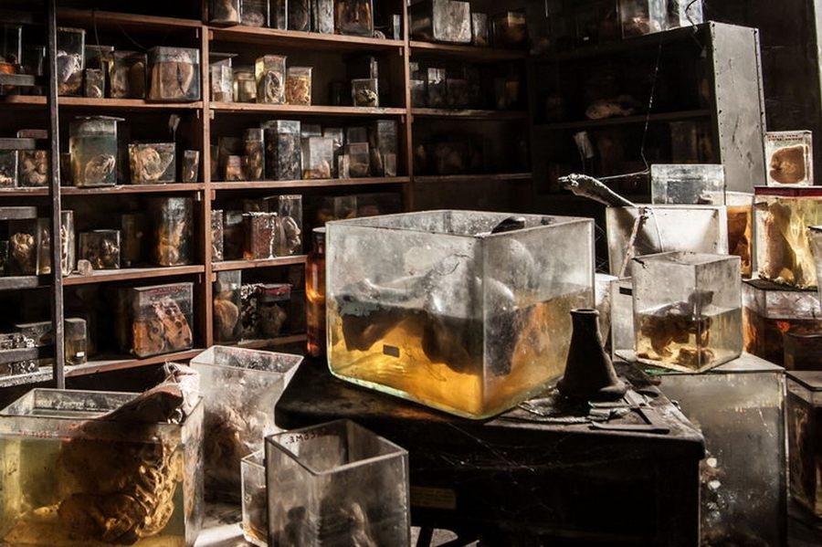 Ужасы в заброшенной лаборатории ветеринарной школы