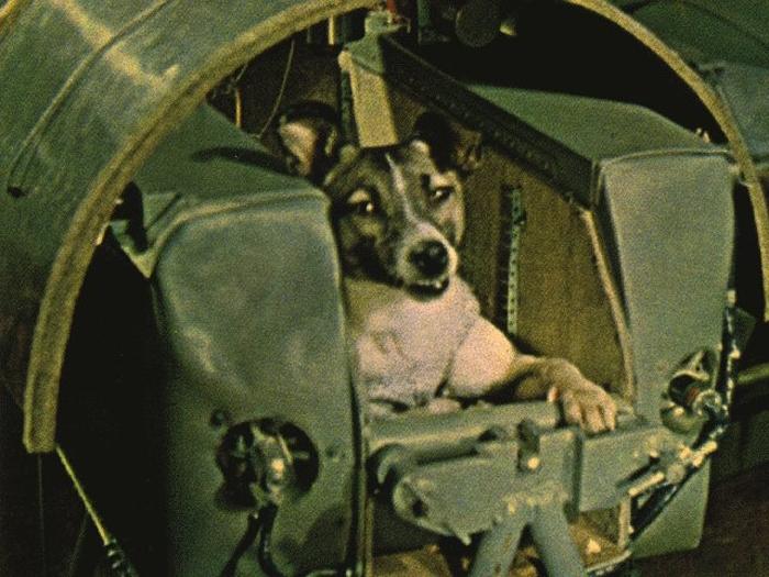 7 грустных фактов о полёте в космос Лайки, первой собаки-космонавта