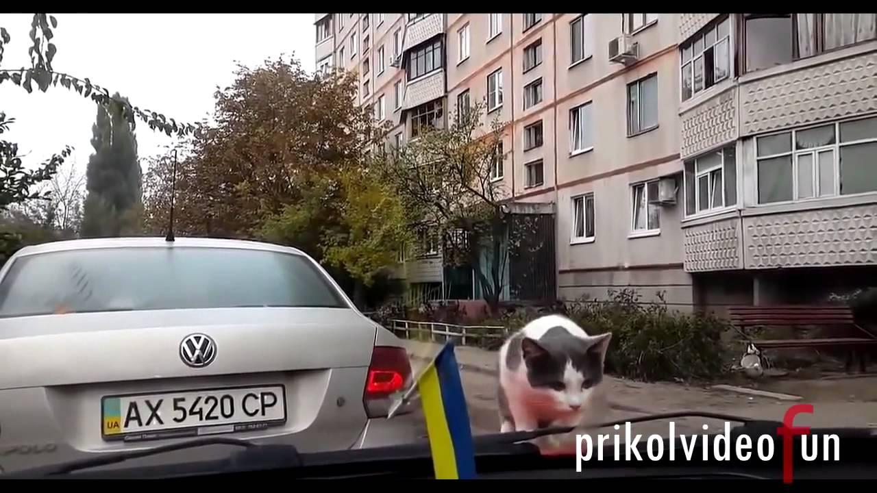 Подборка лучших ПРИКОЛОВ 2013 Нарезка приколов