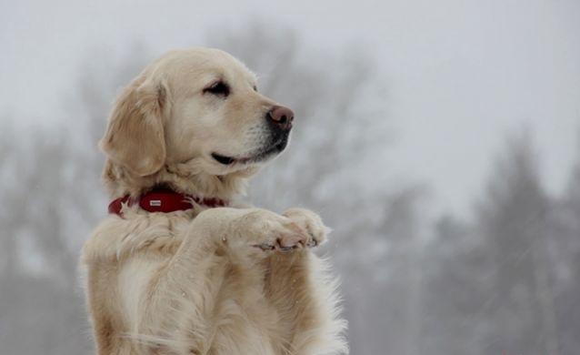 Один день со служебной собакой. Как живут и трудятся «лохматые солдаты