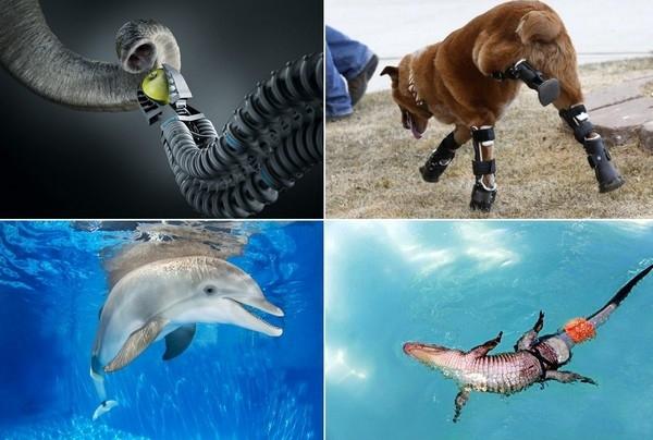 5 невероятных протезов, созданных для животных
