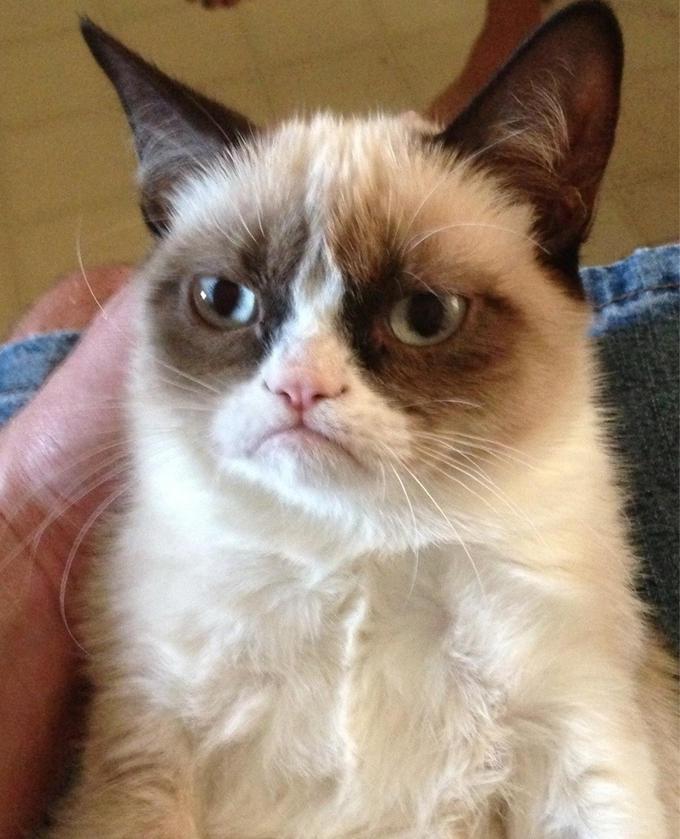 Grumpy Cat- самая серьезная кошка инета!