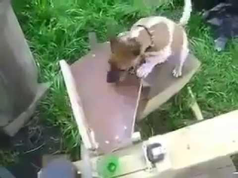 Когда инженер заводит себе собаку