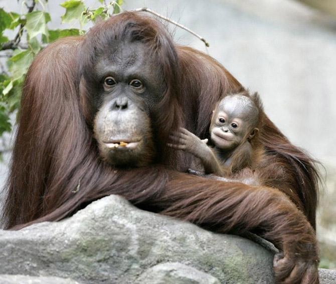 Животные – родители и дети